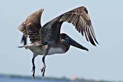 Photograph - Pelican V by Joe Faherty