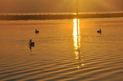 Pelicans And Sunrise Art Print