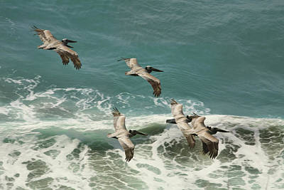 Pelicans In Flight Over Surf Art Print by Gregory Scott