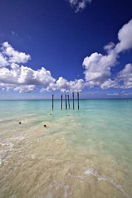 Pelicans Of Sunny Aruba Art Print