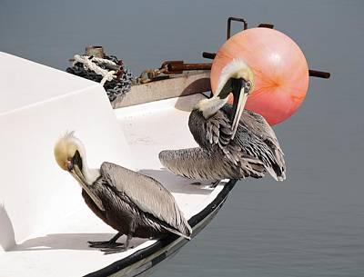 Pelicans Art Print by Paulette Thomas