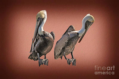 Photograph - Pelicans Posing by Dan Friend