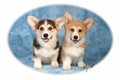 Pup Digital Art - Pembroke Corgi Pups by Maxine Bochnia