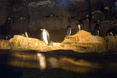Penguins Line The Rocks Art Print by Stacy Gold