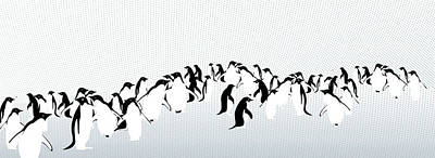 Of Birds Photograph - Penguins by Maya Shleifer
