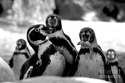 Penguins Art Print by Pravine Chester