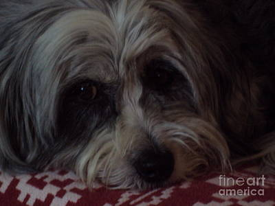 Photograph - Penny by Diane Ursin