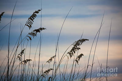 Pensacola Beach Sea Oats Art Print by Steven Gray