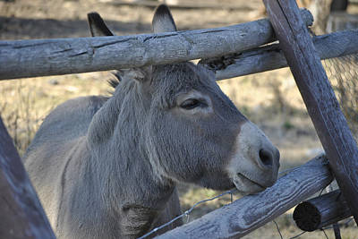 Art Print featuring the photograph Pensive Donkey by Michael Dohnalek