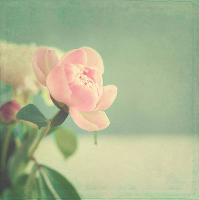 Y120831 Photograph - Peonies by Nicouleur