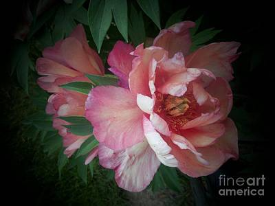 Photograph - Peonies No. 8 by Marlene Book