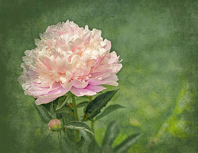 Photograph - Peony Elegance by Trudy Wilkerson