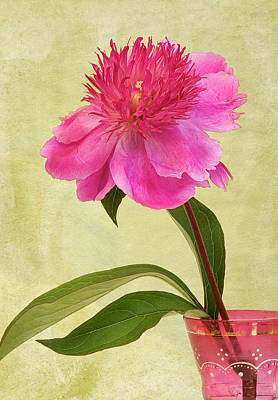 Colored Background Photograph - Peony In Pink Vase by © Leslie Nicole Photographic Art