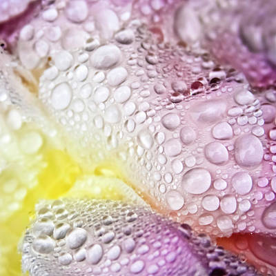Peony Raindrops Art Print by Brooke Anderson Photography