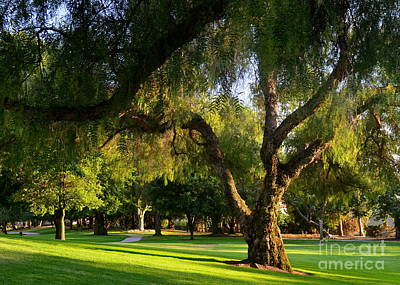 Photograph - Pepper Tree Beauty by Johanne Peale