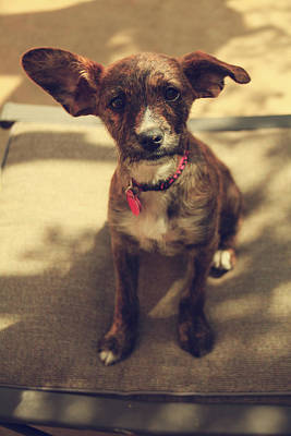 Big Ears Photograph - Pepsi by Laurie Search