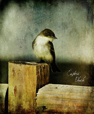 Photograph - Perched Phoebe by Lana Trussell