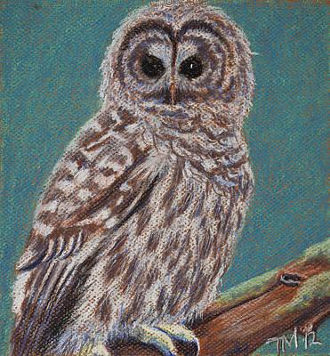 Perching Spotted Owl Art Print by Thomas Maynard