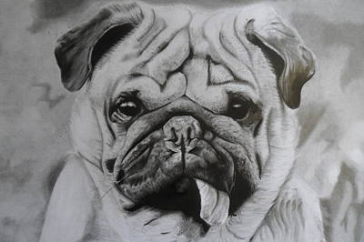 Drawing - Perro by Luis Carlos A