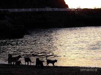 Photograph - Perros Marinos by Karin Cortez