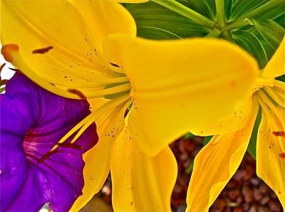 Pet Lily Art Print by Randy Rosenberger