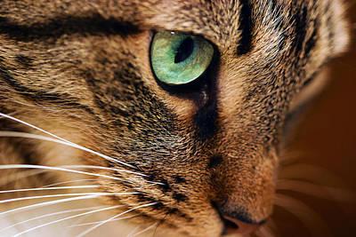 Photograph - Pet Portrait by Gregory Scott