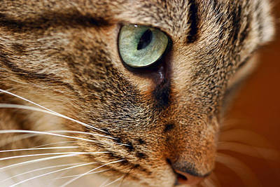 Photograph - Pet Portrait Variant 2 by Gregory Scott