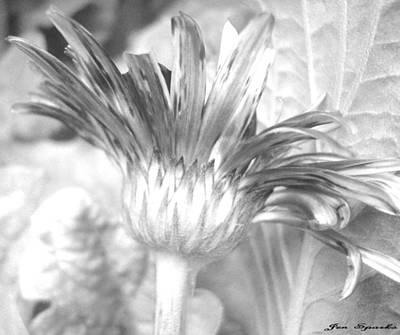 Photograph - Petal Textures by Jen Sparks