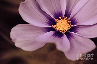 Aimelle Photograph - Petaline - P04d by Variance Collections