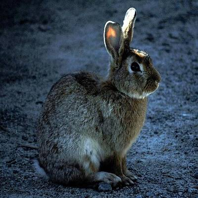 Hop Photograph - Peter Cottontail by Daryl Macintyre