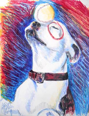 Pitbull Drawing - Petey  by Jon Baldwin  Art