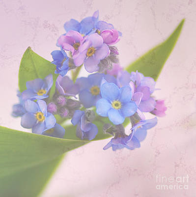 Petit Forget Me Not Art Print by Tanja Riedel