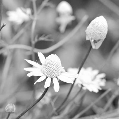 Photograph - Petite Garden Flowers by Margaret Pitcher