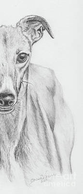 Rescued Greyhound Drawing - Petunia II by Teresa Vecere