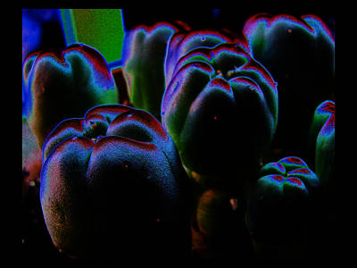 Art Print featuring the photograph Peyote Mind by Susanne Still