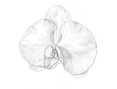 Black Drawing - Phalaenopsis Orchid by Logan Parsons