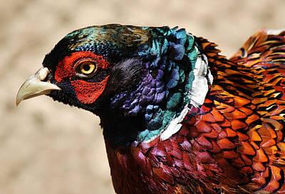 Pheasant Art Print by Paulette Thomas