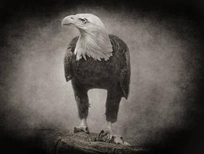Photograph - Philadelphia Eagle by Pat Abbott