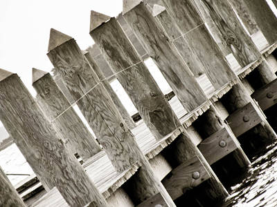 Amy Weiss - Phillies Dock Halladay by Trish Tritz
