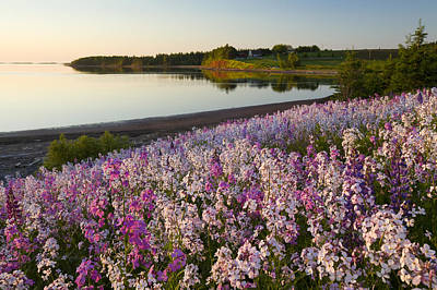 Phlox Flowers Growing On Banks Of New Art Print by John Sylvester