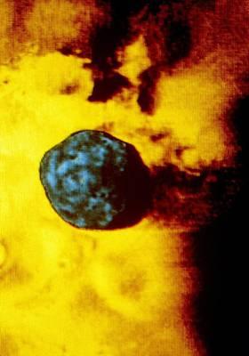 Phobos 2 Spacecraft Photo Of Martian Moon Phobos Art Print