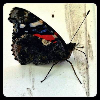 Animals Wall Art - Photograph - Phoenician Butterfly by Natasha Marco