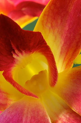 Photograph Of A Hope Orchid Flower Art Print