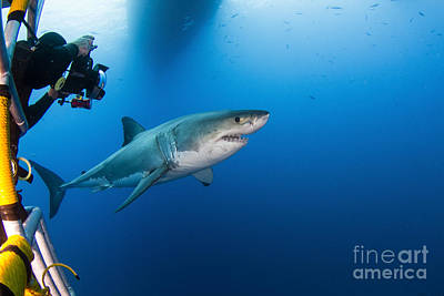 Cage Diving Photograph - Photographer Taking A Picture Of A Male by Todd Winner