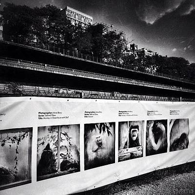 Photoville's the 1000ft Fence: An Art Print