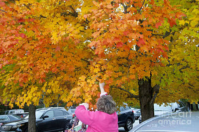 Photograph - Picking Autumn Leaves 3982 by Charles  Ridgway