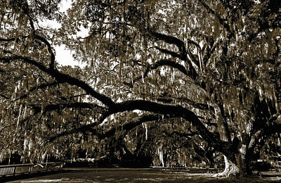 Art Print featuring the photograph Picnic Under The Oak by DigiArt Diaries by Vicky B Fuller