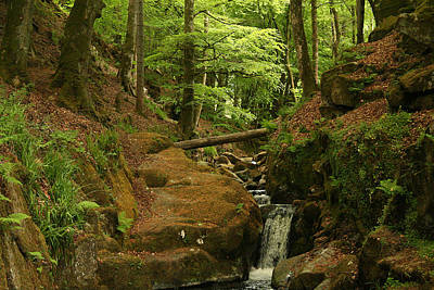 Photograph - Picturesque Creek 2 by Van Corey
