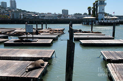 Digital Art - Pier 39 San Francisco by Carol Ailles