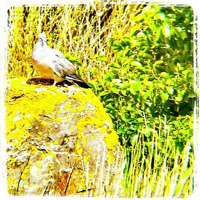 Norfolk Photograph - Pigeon On A Rock #pigeon #bird #rock by Invisible Man
